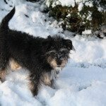How tweet - poppy in the snow